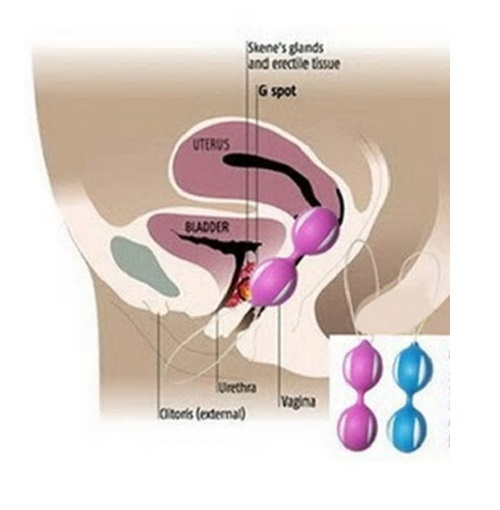Kegel-pleasure-balls-diagram